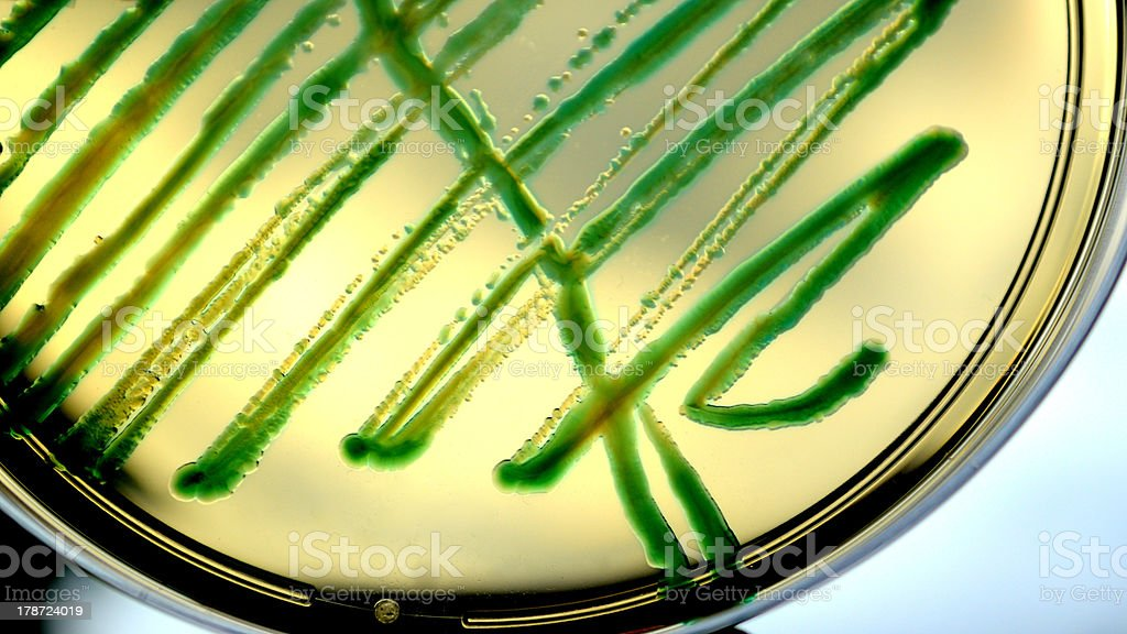 Pseudomonas aeroginosa royalty-free stock photo