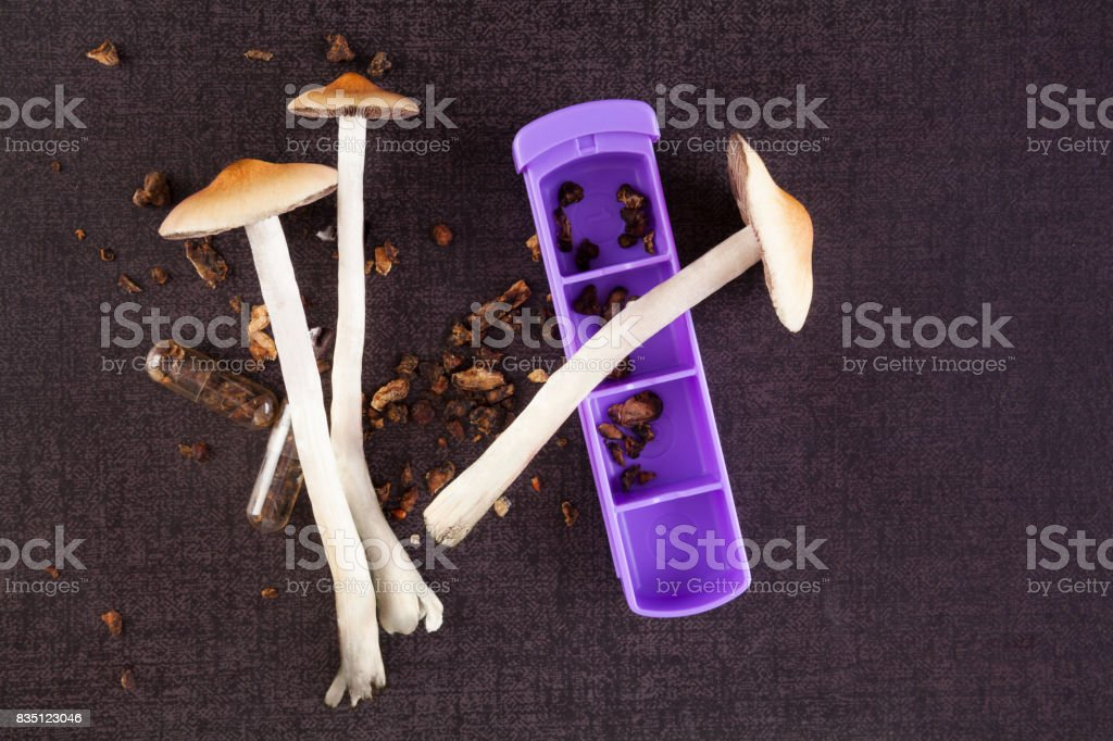 Psilocybine magic mushrooms. stock photo