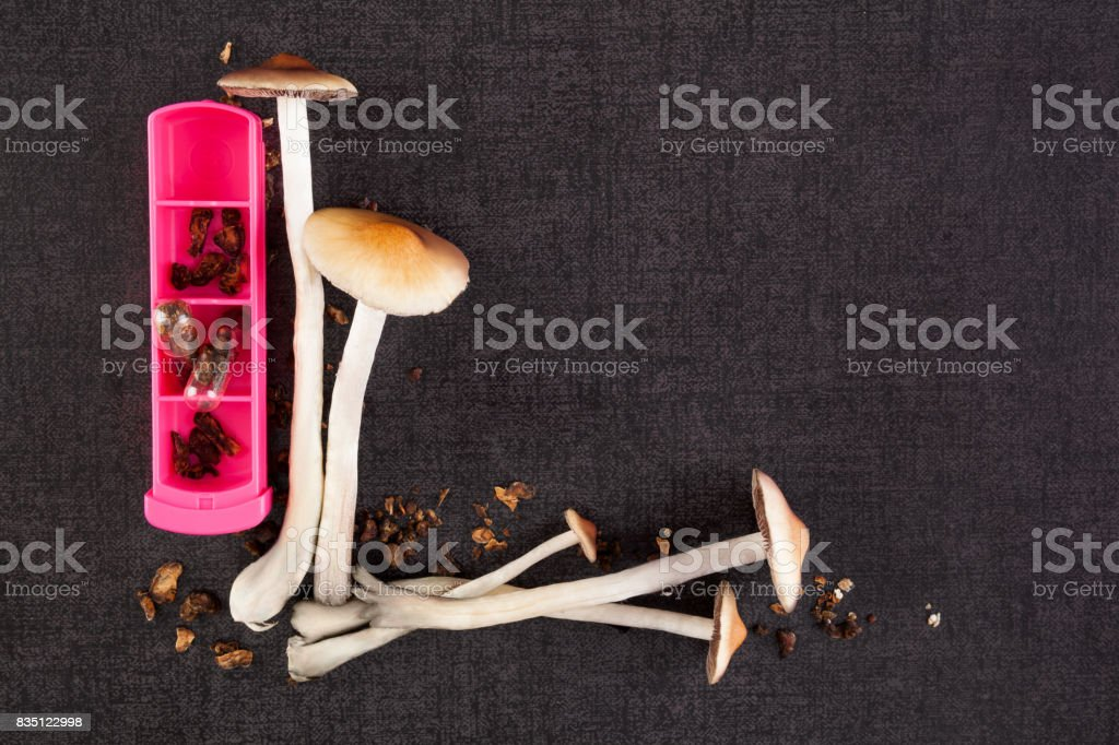 Psychedelic mushrooms microdosing. stock photo
