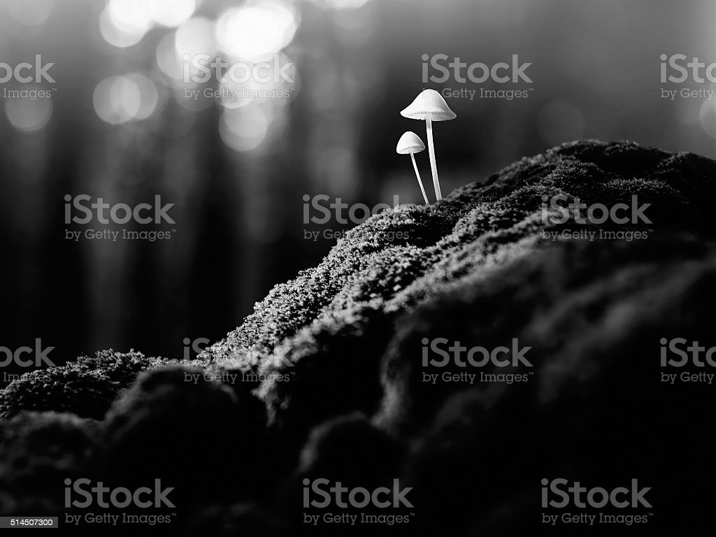 Psychedelic mushrooms stock photo