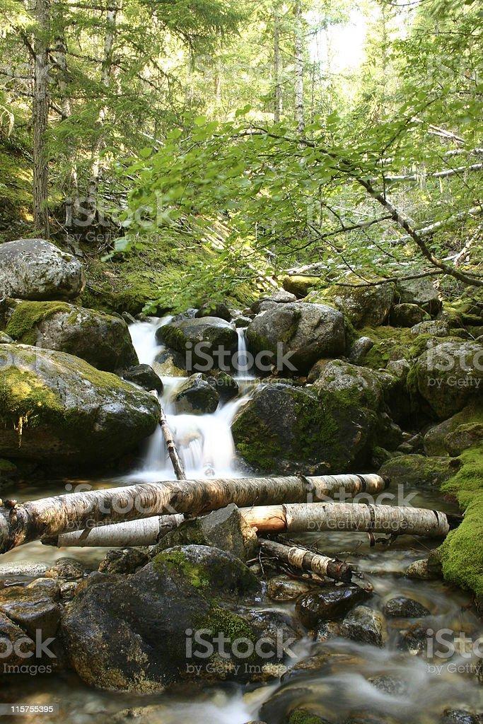Ptarmigan Creek, Monashee Provincial Park, British Columbia, Canada. stock photo