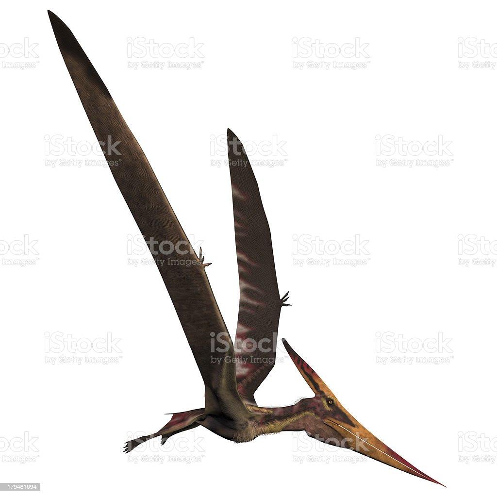 Pteranodon on White royalty-free stock photo