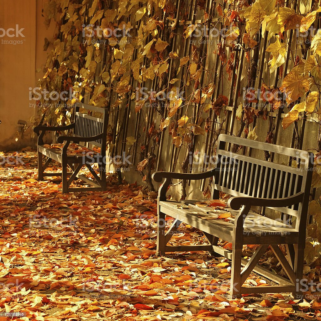 Public benches in the lights of autumn stock photo