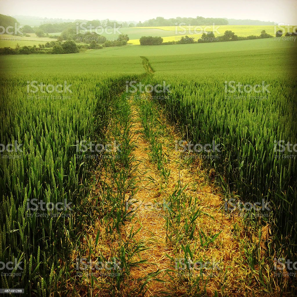 Public Footpatch Through East Anglian Arable Farmland stock photo