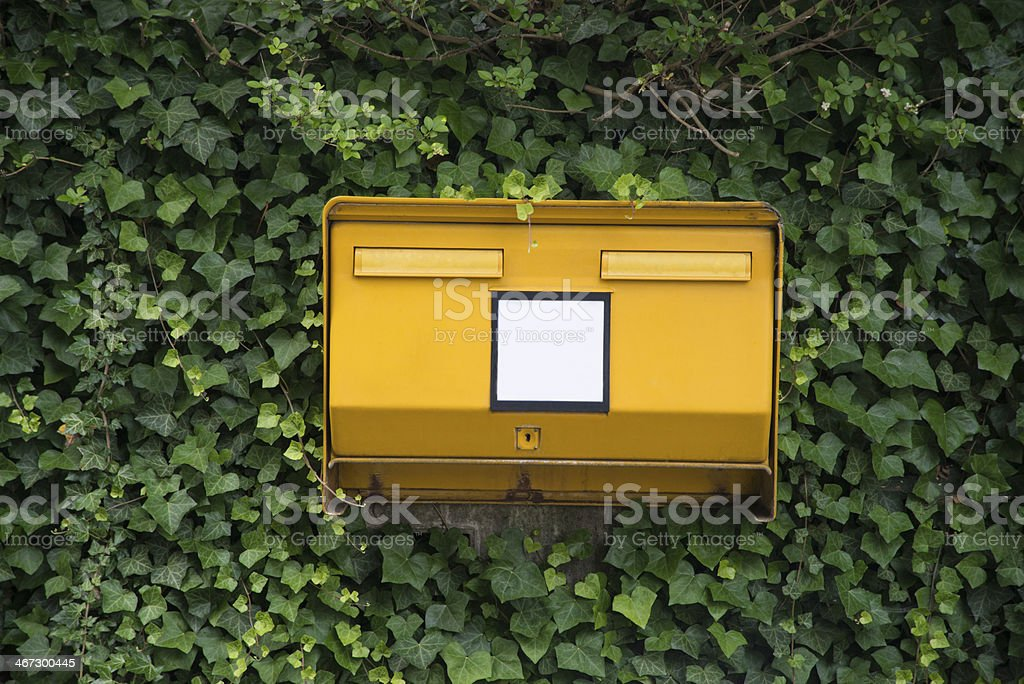 Public letterbox covered in ivy stock photo