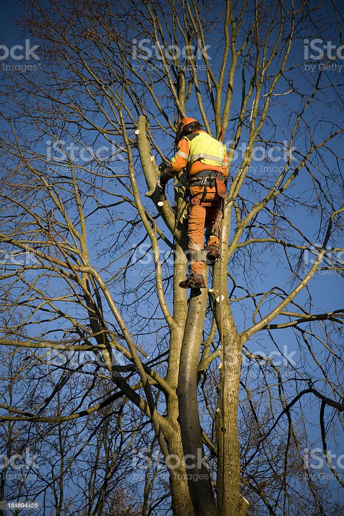 Public tree cutter. royalty-free stock photo