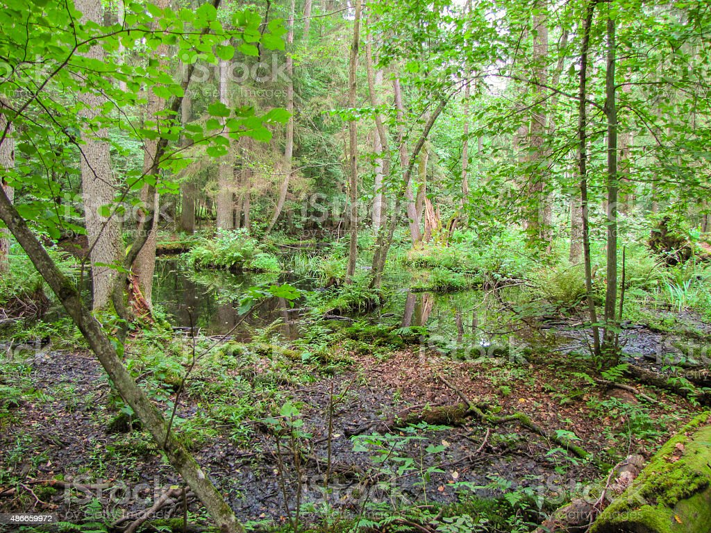 puddle in woodland stock photo