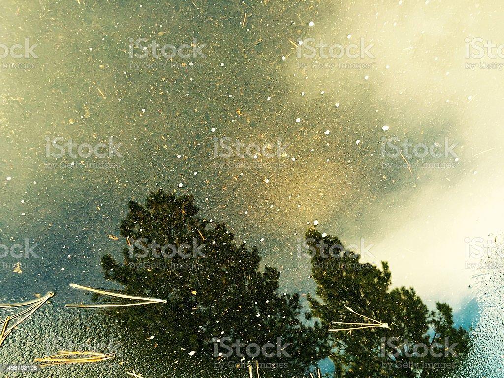 Puddle reflection of Oregon Trees royalty-free stock photo