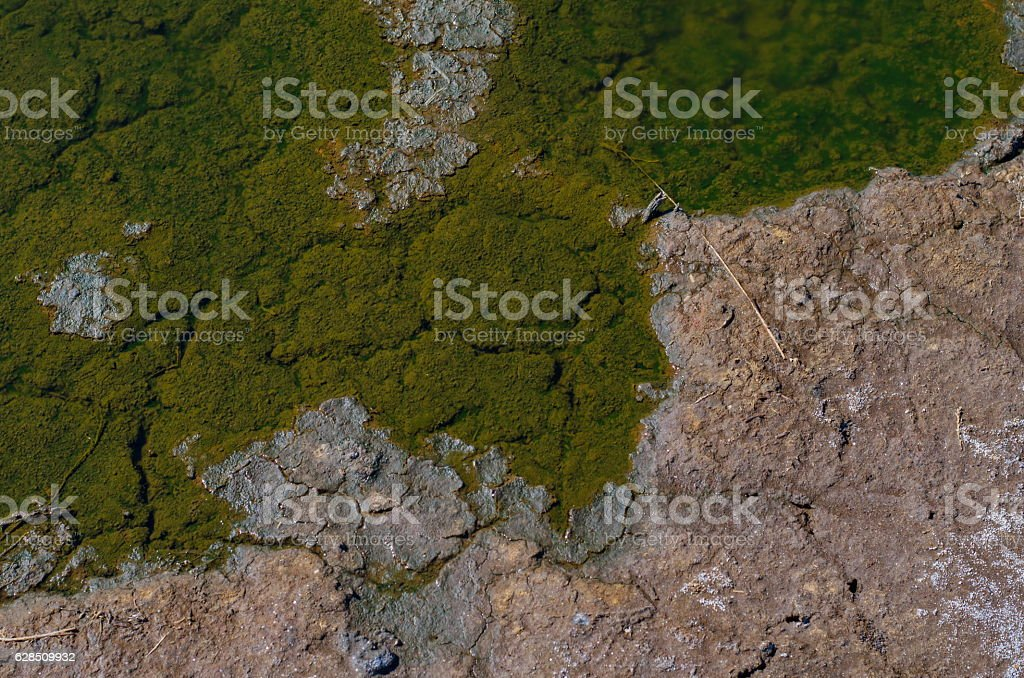 Puddles of dirty water on cracked dry soil stock photo