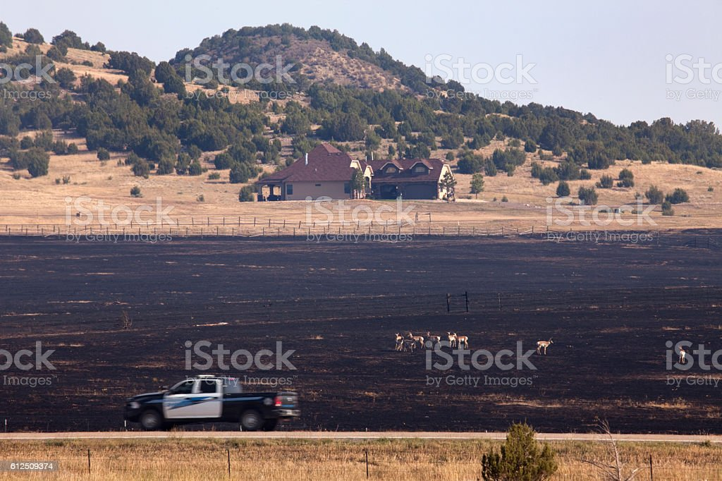 Pueblo Colorado Beulah Hill Fire wildfire smoke home pronghorn wildlife stock photo