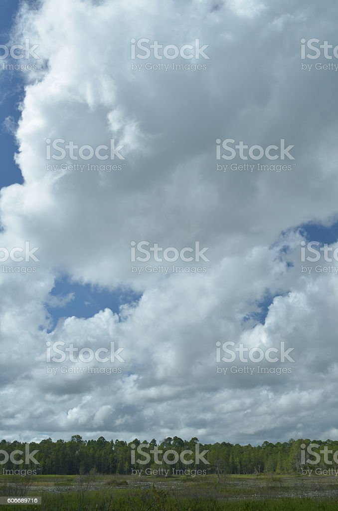 Puffy clouds and blue sky above wetland treeline stock photo