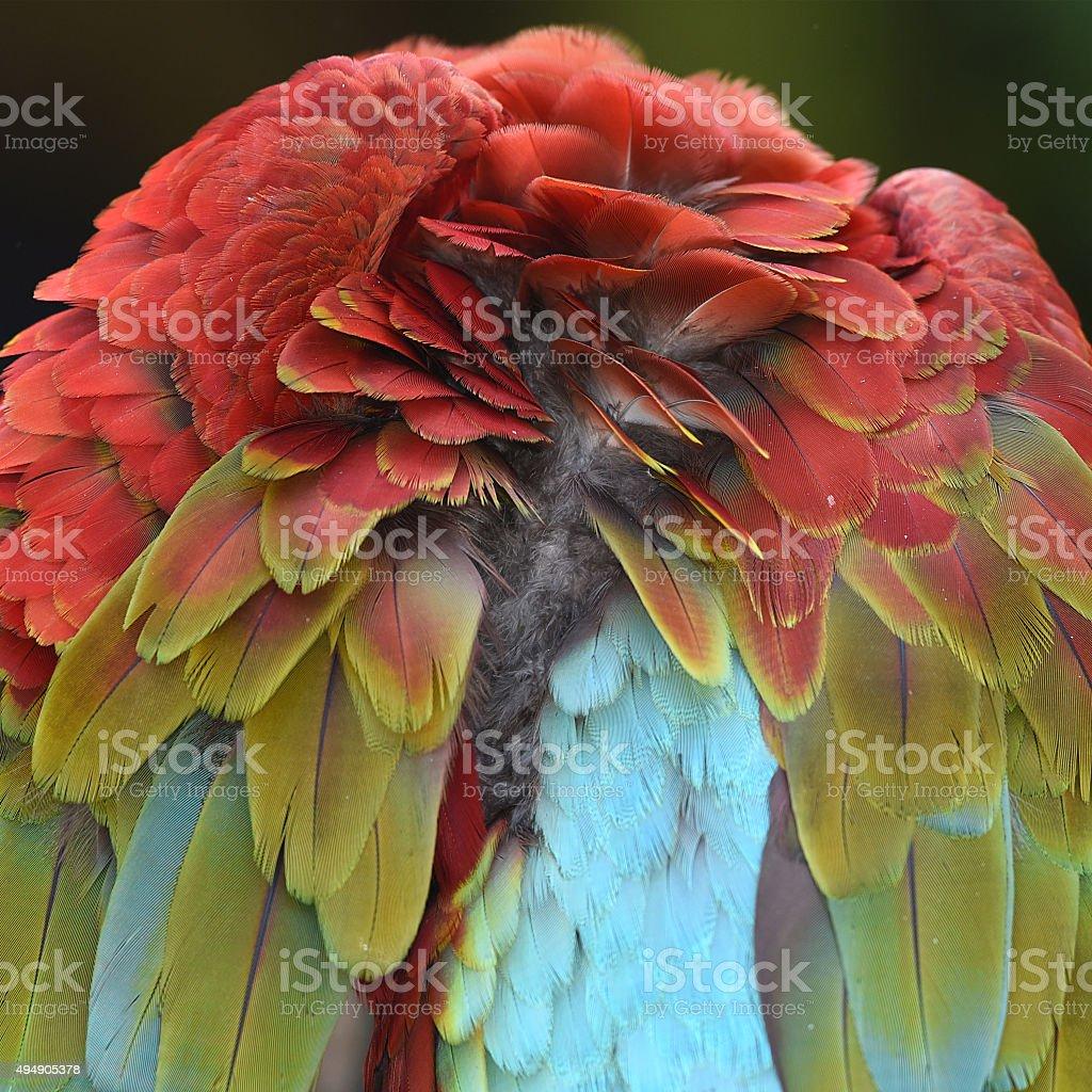 Doudoune plumes. photo libre de droits