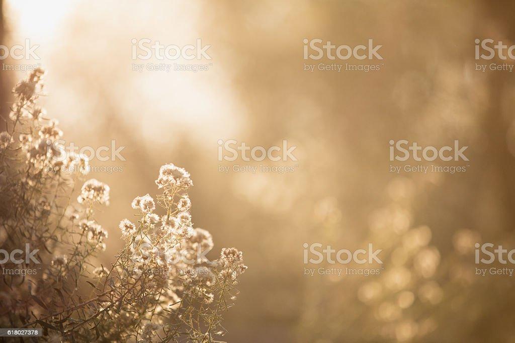 Puffy White Golden Plants stock photo