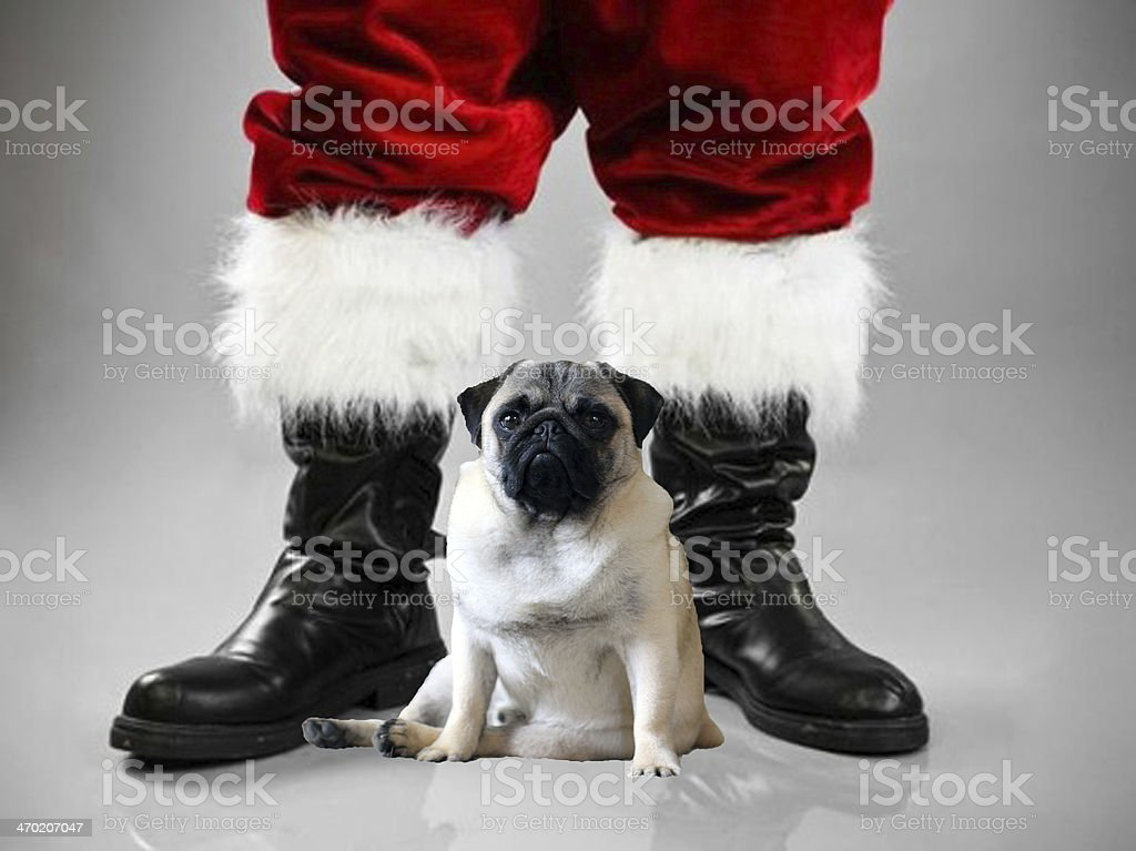 Pug and Santa stock photo
