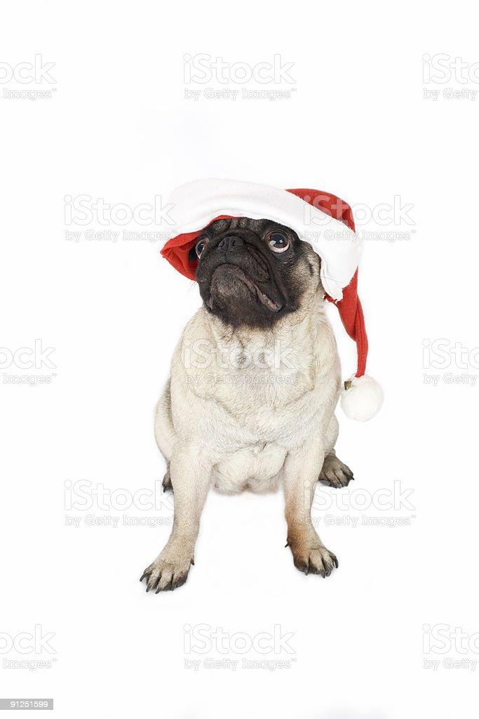 pug in santa hat  royalty-free stock photo