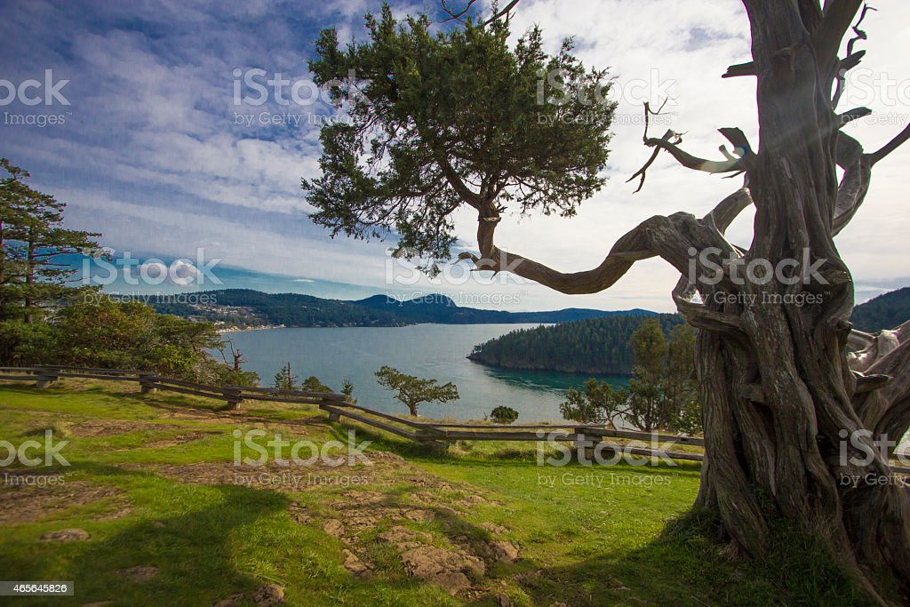 Puget Sound view framed by snag with Anacortes background horizontal stock photo