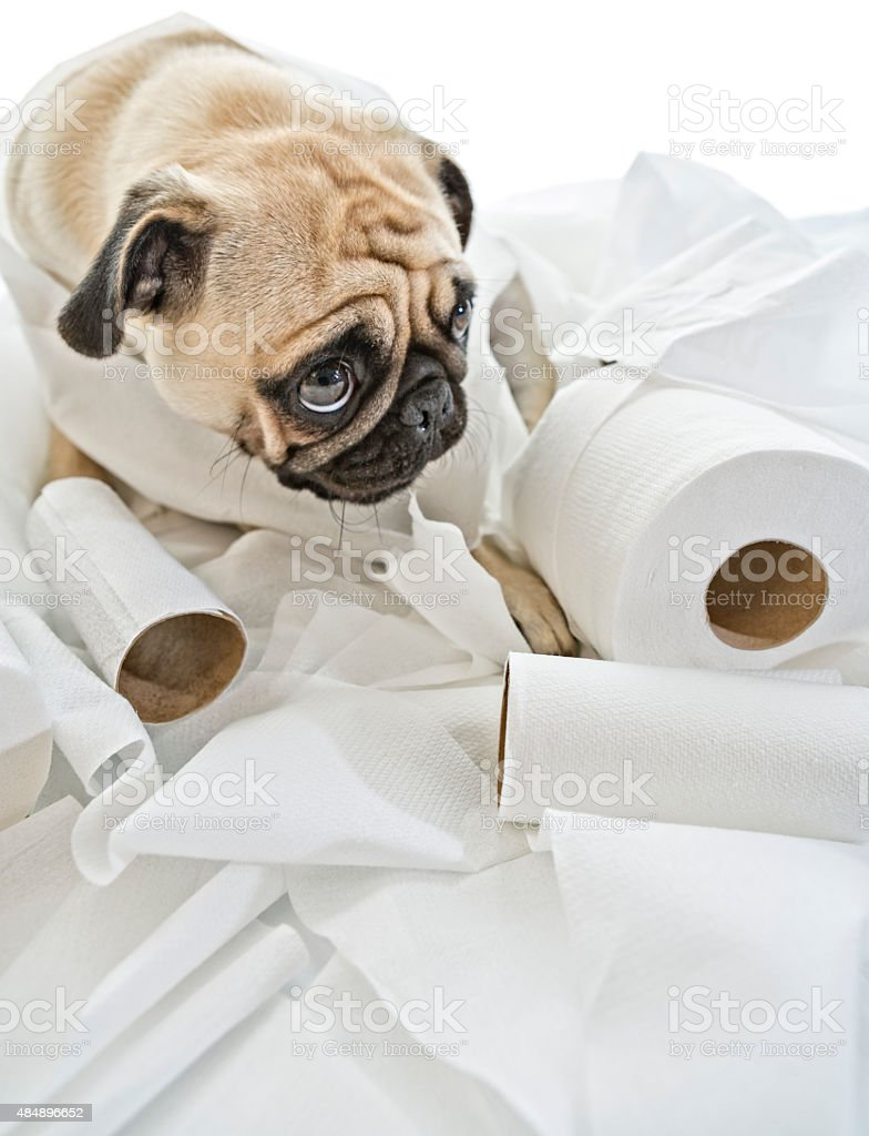Puk Pukster in Trouble Again with Toilet Paper stock photo