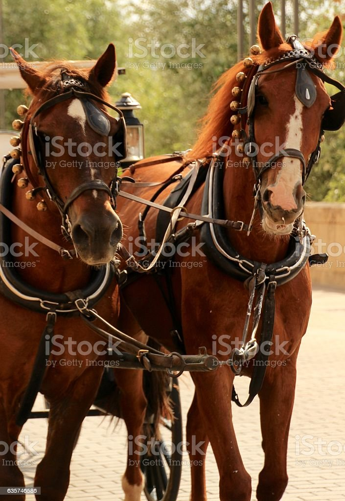 Pulling the carriage stock photo
