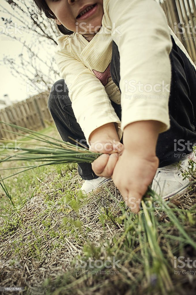 pulling weeds stock photo