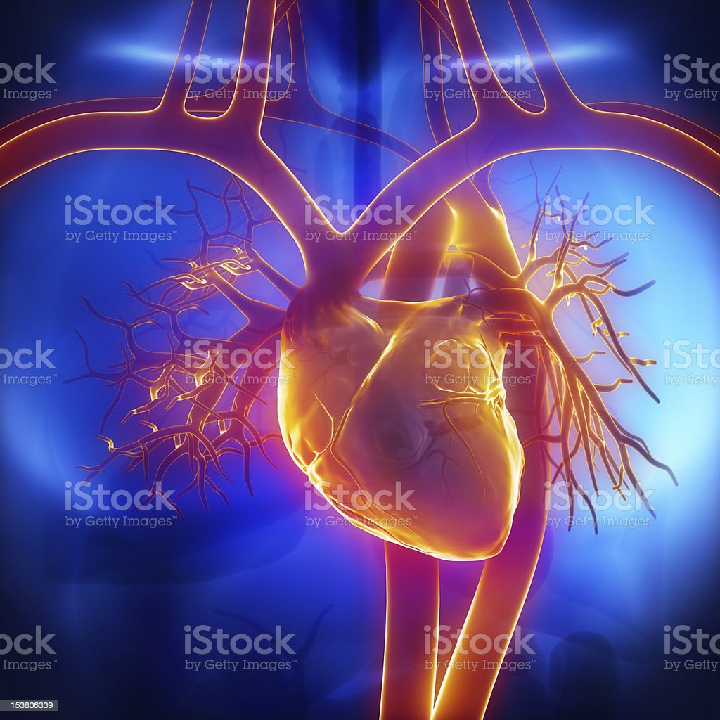 Pulmonary trunk, vein, aorta in heart stock photo