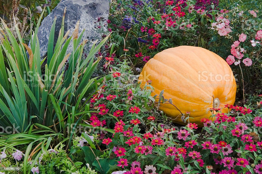 Pumkin and Rock with Flowers royalty-free stock photo