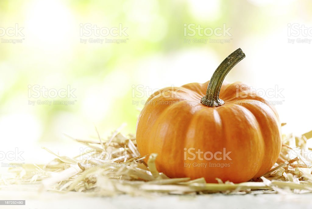 Pumkin with copy space royalty-free stock photo