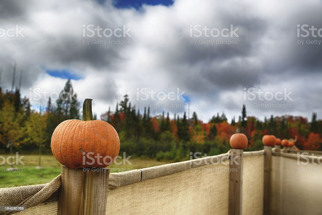 Pumkins on fence posts royalty-free stock photo