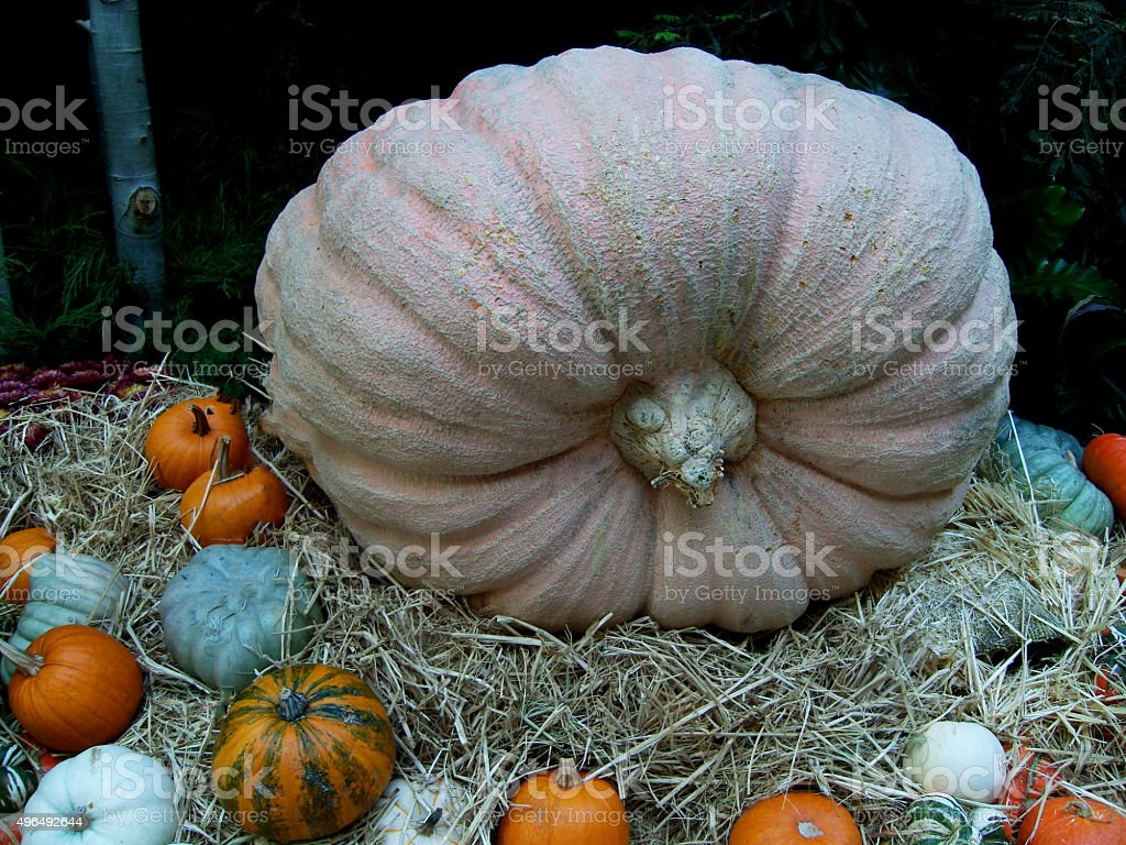Pumkins stock photo