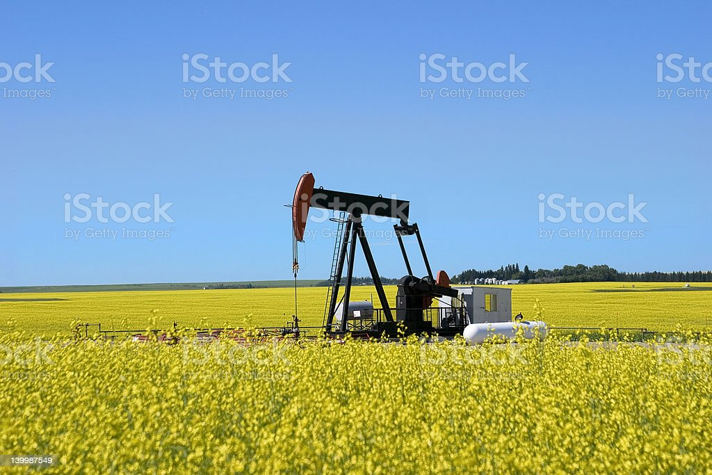 Pump Jack in a Canola Field II royalty-free stock photo