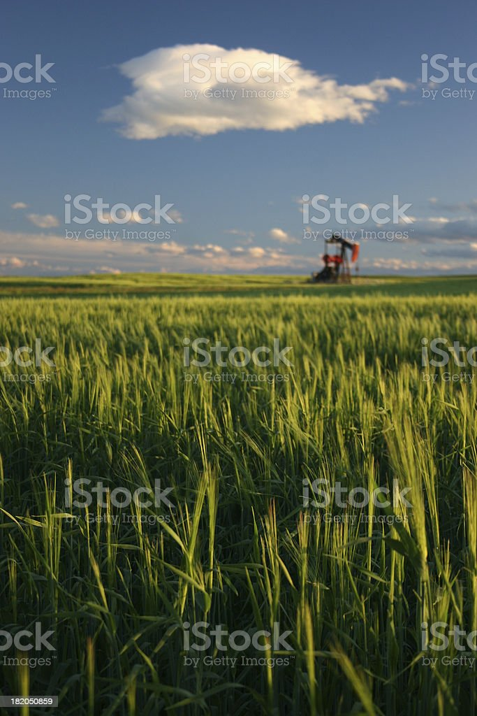 Pumpjack and Green Unripe Wheat on the Prairie stock photo