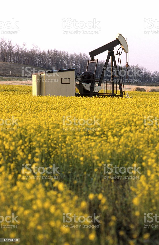 Pumpjack in a Canola Field royalty-free stock photo