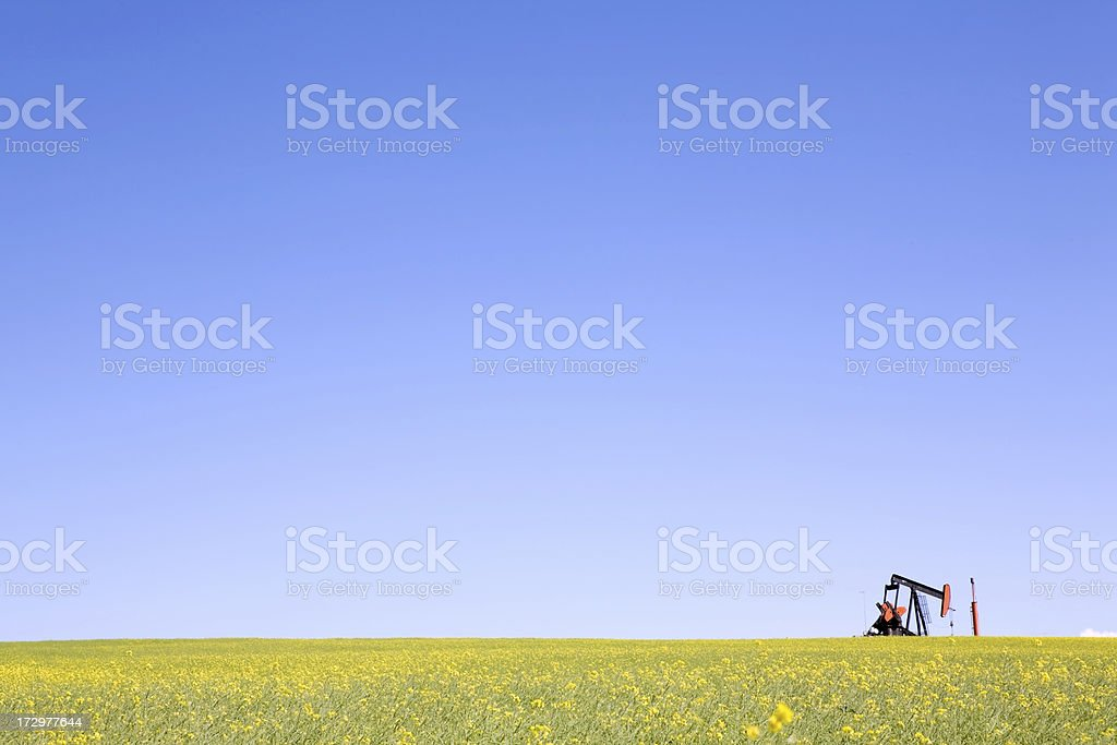 Pumpjack in a Field of Canola royalty-free stock photo