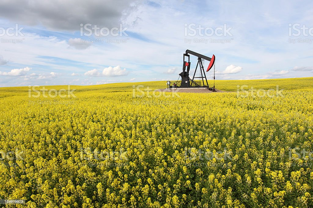 Pumpjack in Canola Field in Alberta Canada stock photo