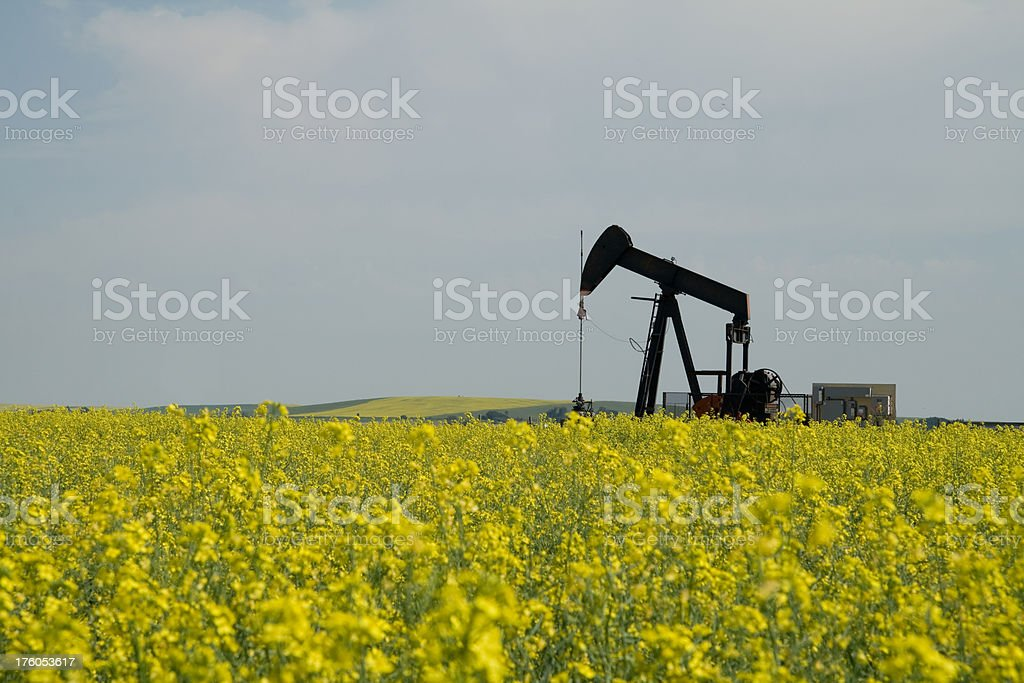 Pumpjack in Canola Field royalty-free stock photo