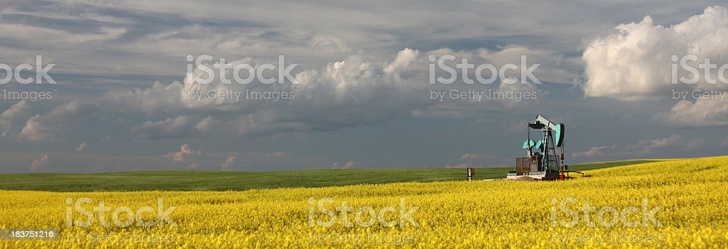 Pumpjack in Canola Panorama royalty-free stock photo
