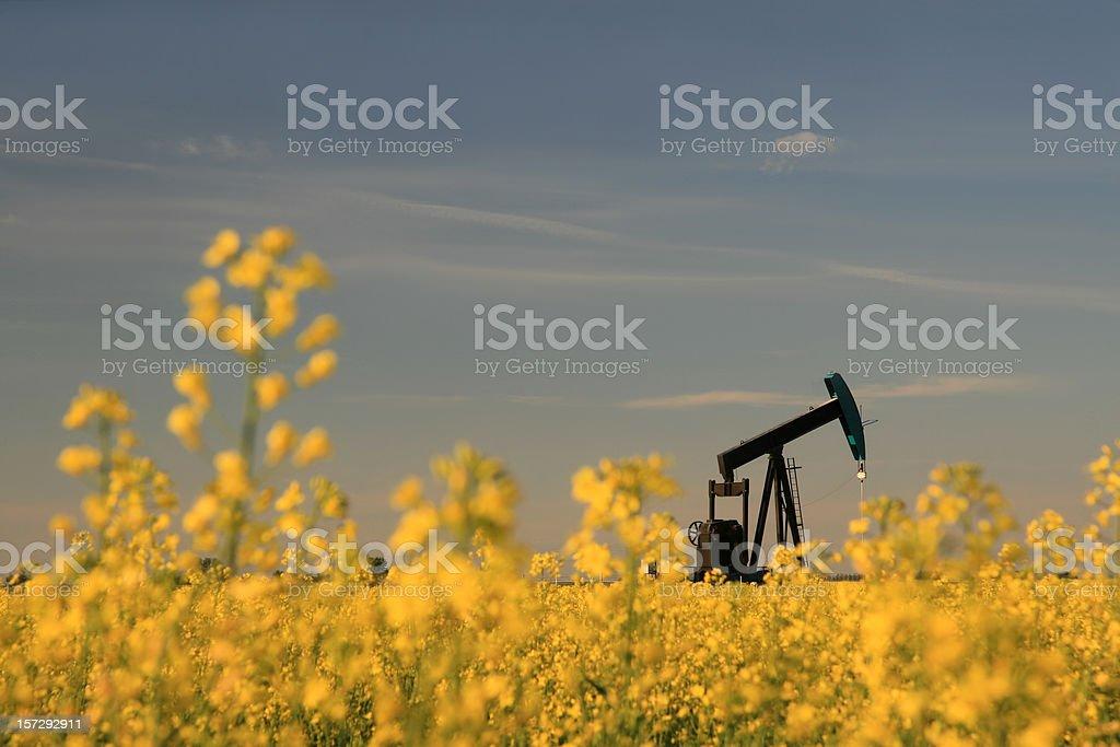 Pumpjack in Canola stock photo