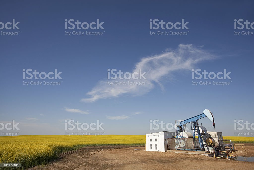 Pumpjack in Canola royalty-free stock photo