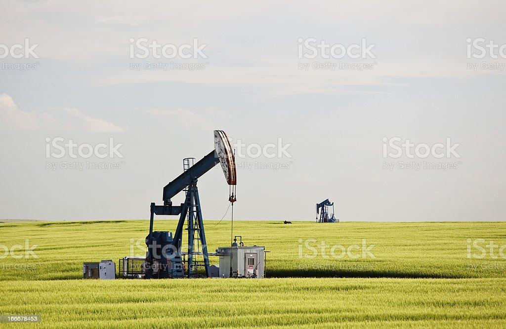 Pumpjack in Wheat Field in Oil Field stock photo