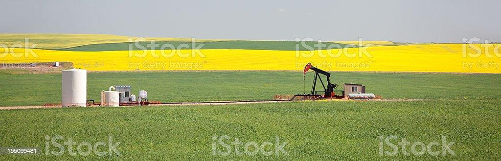 Pumpjack Panorama in Alberta Canola Field stock photo