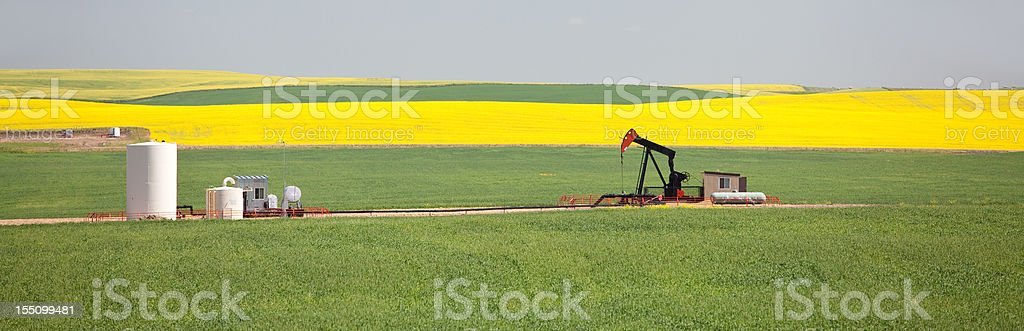 Pumpjack Panorama in Alberta Canola Field stock photo
