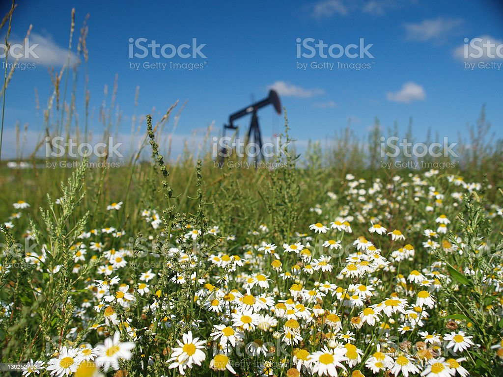 Pumpjack with Daisies royalty-free stock photo