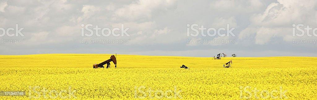 Pumpjacks in Canola Field by Saskatoon Saskatchewan royalty-free stock photo