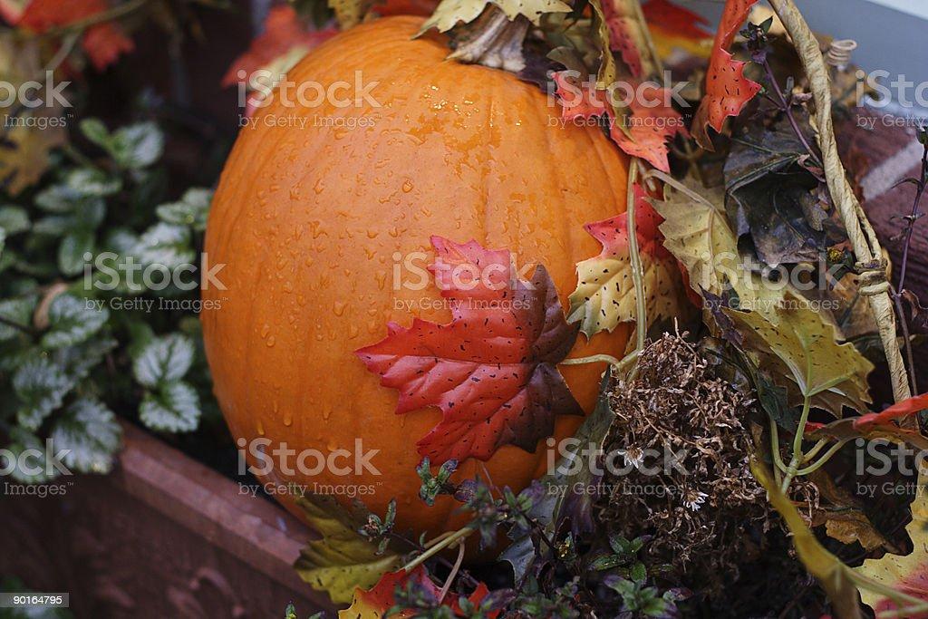 Pumpkin 2 royalty-free stock photo