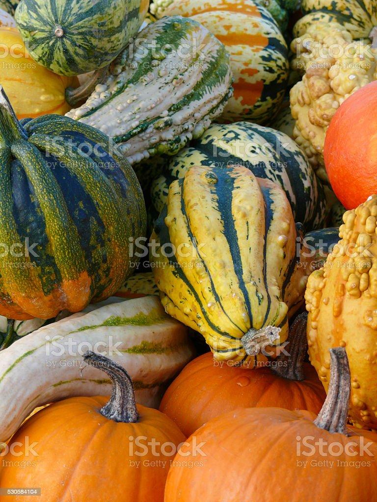 Pumpkin and Gourd Harvest II stock photo