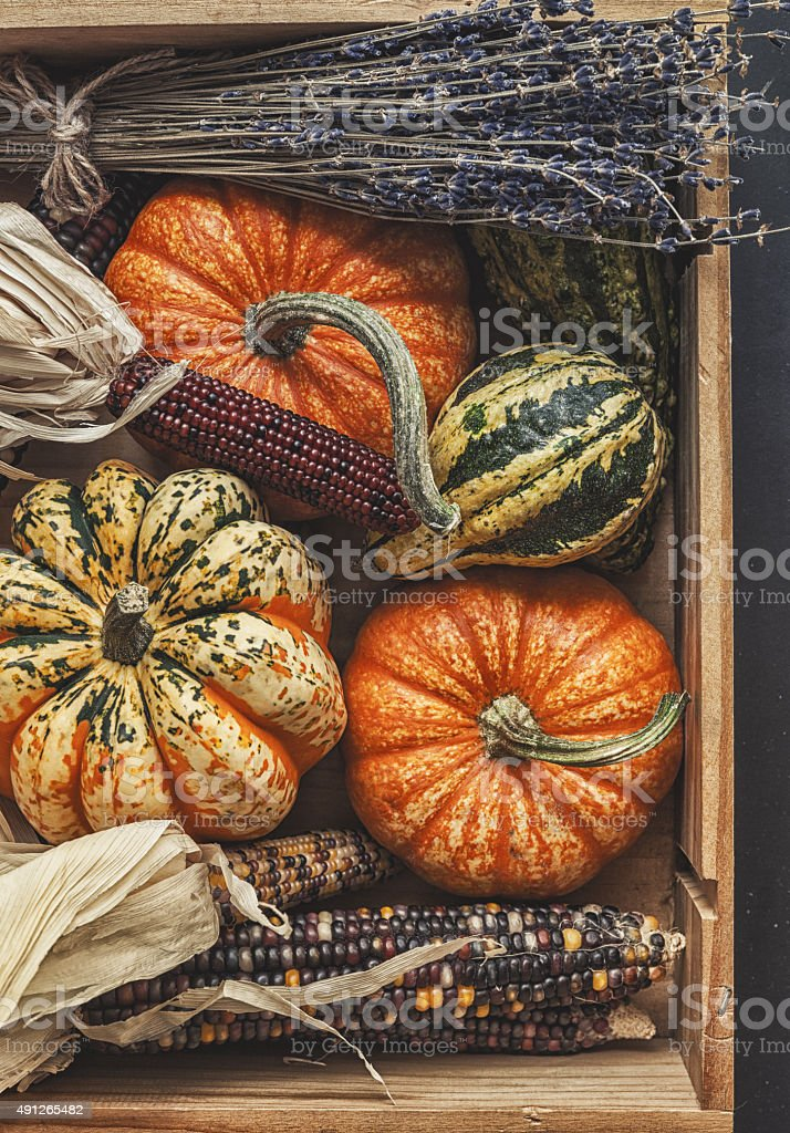 pumpkin and indian corn stock photo