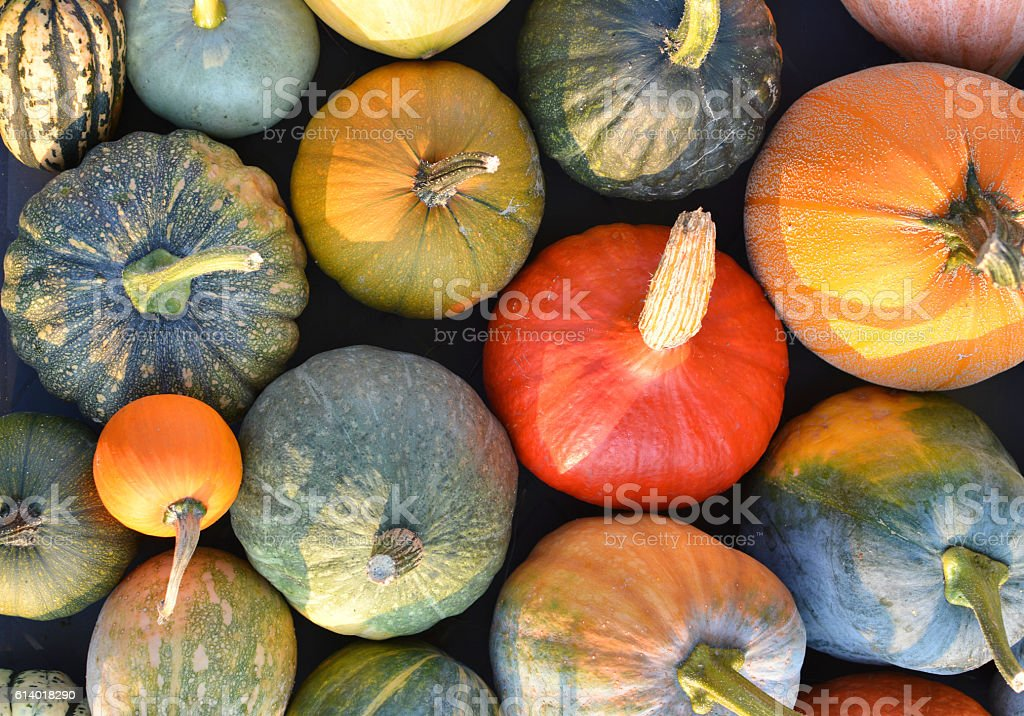 Pumpkin and winter squash varieties stock photo