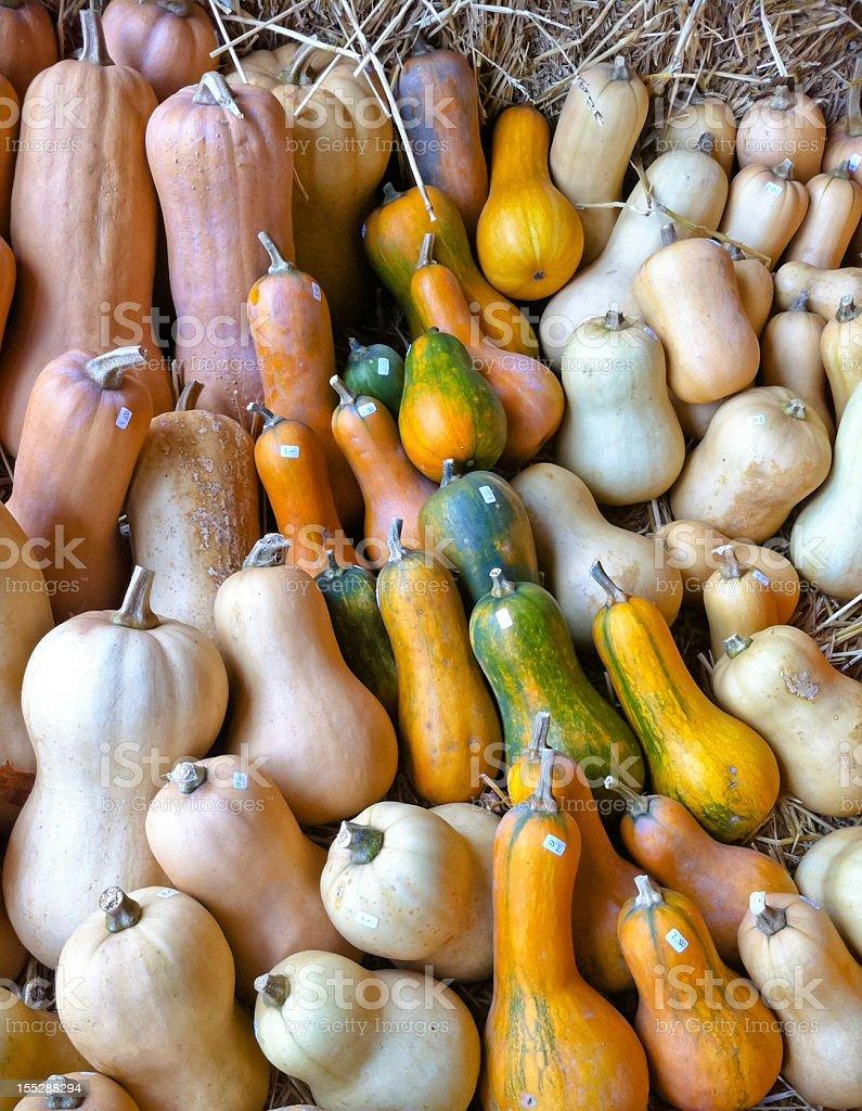 Pumpkin arrangement royalty-free stock photo