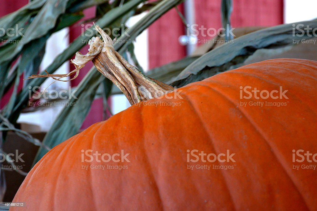 Pumpkin by the Barn royalty-free stock photo