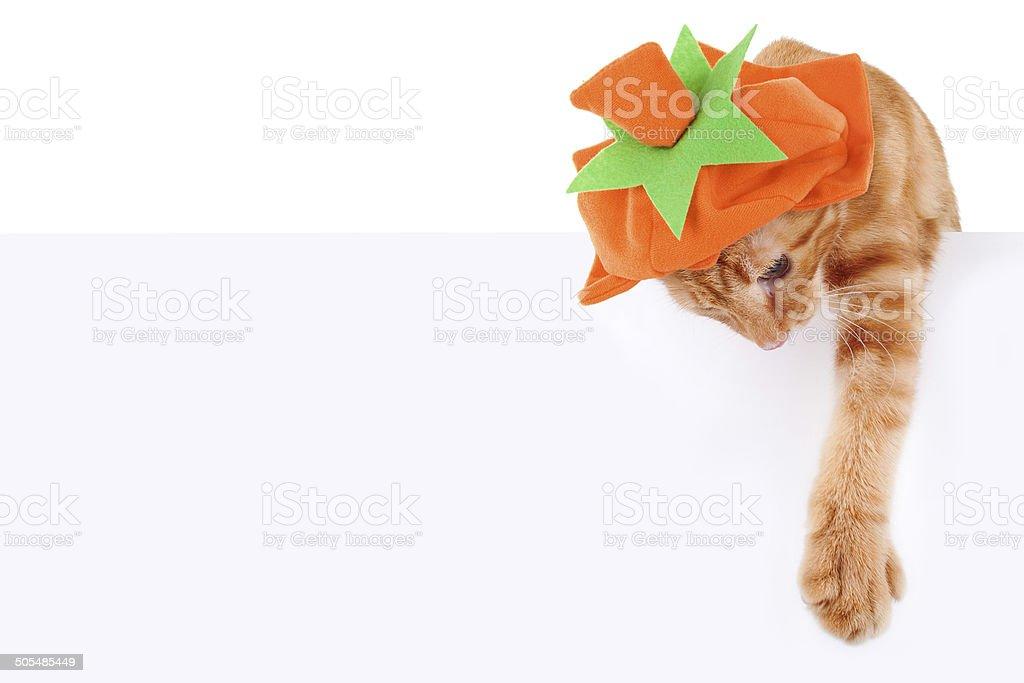 Pumpkin Cat Sign stock photo