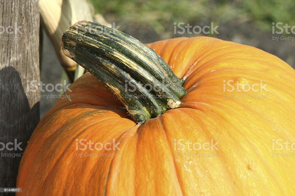 Pumpkin Close up royalty-free stock photo